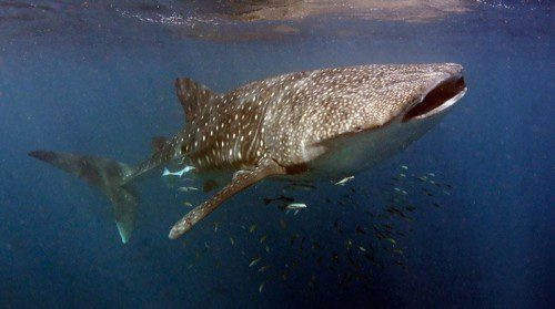 A Guide To Ningaloo Reef