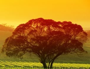 Tours and Travels South Australia
