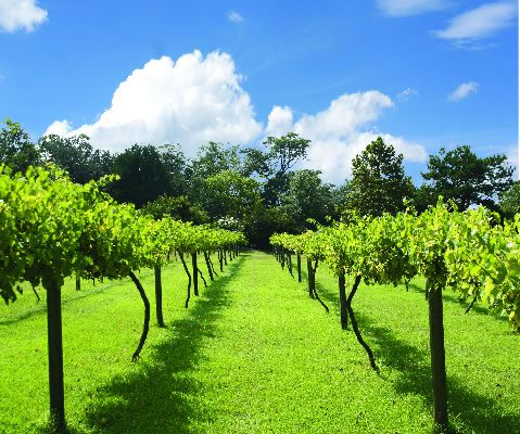 Tours and Travels Hunter Valley New South Wales