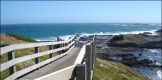 Tours and Travels Phillip Island Victoria
