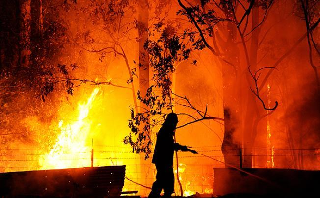Forest Fires In NSW