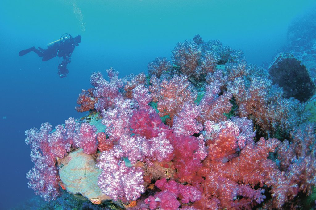 Diver with coral on Ningaloo Reef