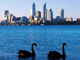 Day Tours from Fremantle to the Swan Valley