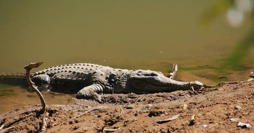 What to Expect on Broome to Darwin Tours