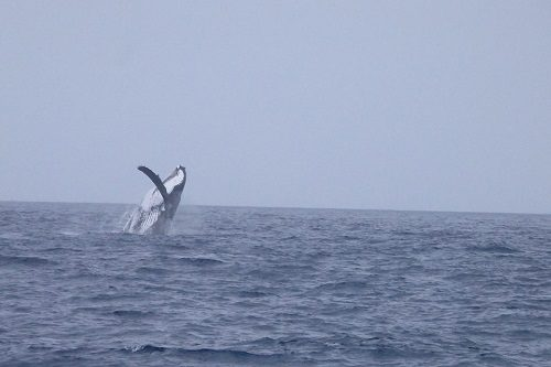 Humpback whale cairns