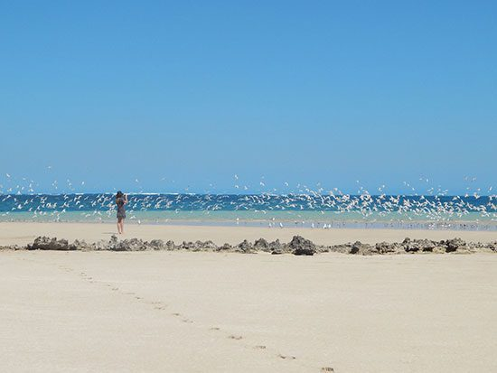 girl taking picture of seabirds on the beach