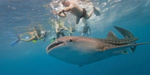 Perth to Exmouth whale shark tours