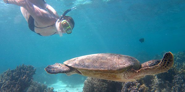 snorkelling with turtles in australia