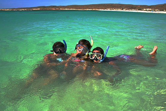 snorkelling in the ningaloo reef