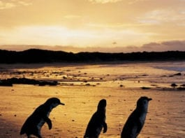 Day Trips from Perth to Penguin Island