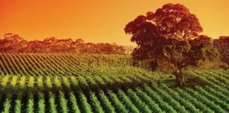 Perth to Adelaide Coach Tours