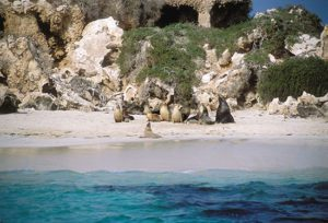 Day trips from Perth Western Australia this summer