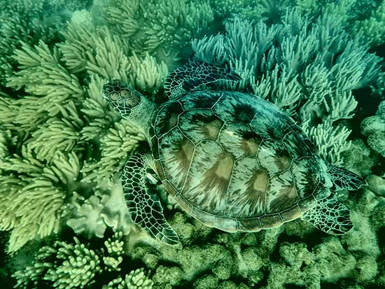turtle camouflaged in the ocean