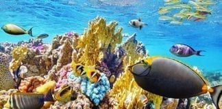 Great Barrier Reef Day Tour