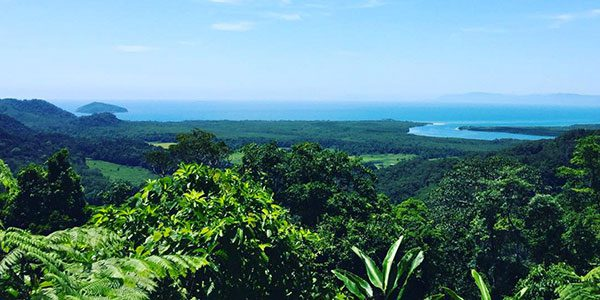 looking out over the daintree rainforest