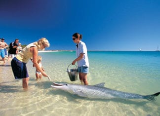 Perth to Broome coach tours via Monkey Mia