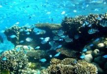 Great Barrier Reef Tours and Accommodation