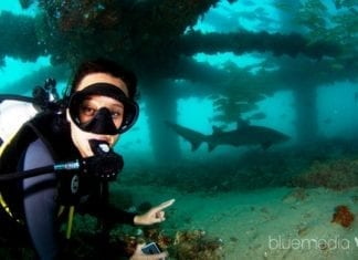 Best Places To Dive With The Whale Sharks