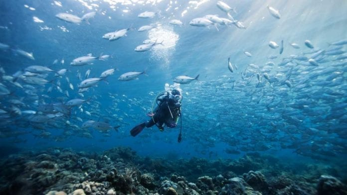 Best places to dive in Northern Western Australia