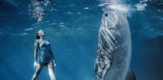 Perth to Exmouth Whale Shark 4-day-tours
