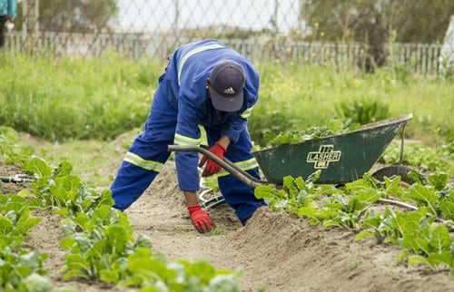 How to find Farm jobs in Western Australia