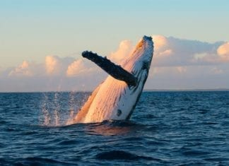 Best Perth To Exmouth Whale Shark Tours