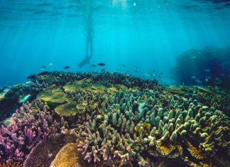 Why Choose an Eco Tour Whilst Visiting the Great Barrier Reef?