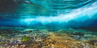 Great Barrier Reef Tours And Cruises
