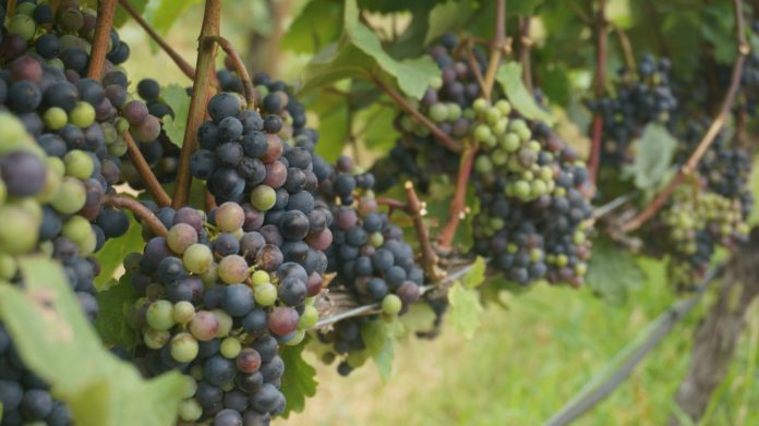 Day Trips From Sydney to Vineyards