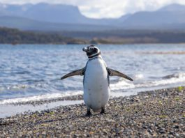 Day Trip to Penguin Island for Backpackers
