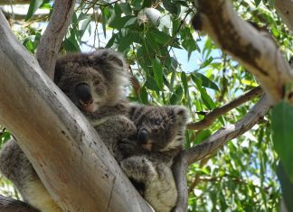 Day Trips and Tours from Melbourne this February