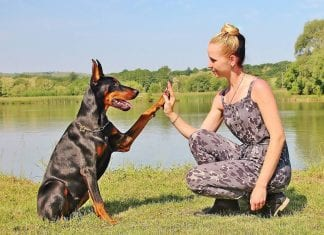 How to Train Your Four-Legged Friend Stress-Free