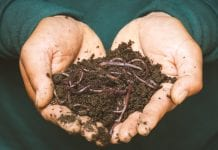 What You Need to Know About Worm Castings