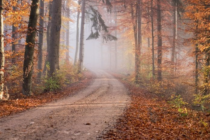 Fall Foliage Road Trips For Best Scenic Drives