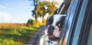 Useful Car Accessories for Dog Owners