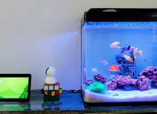 A Detailed Guide To Understand Everything About Aquarium Maintenance